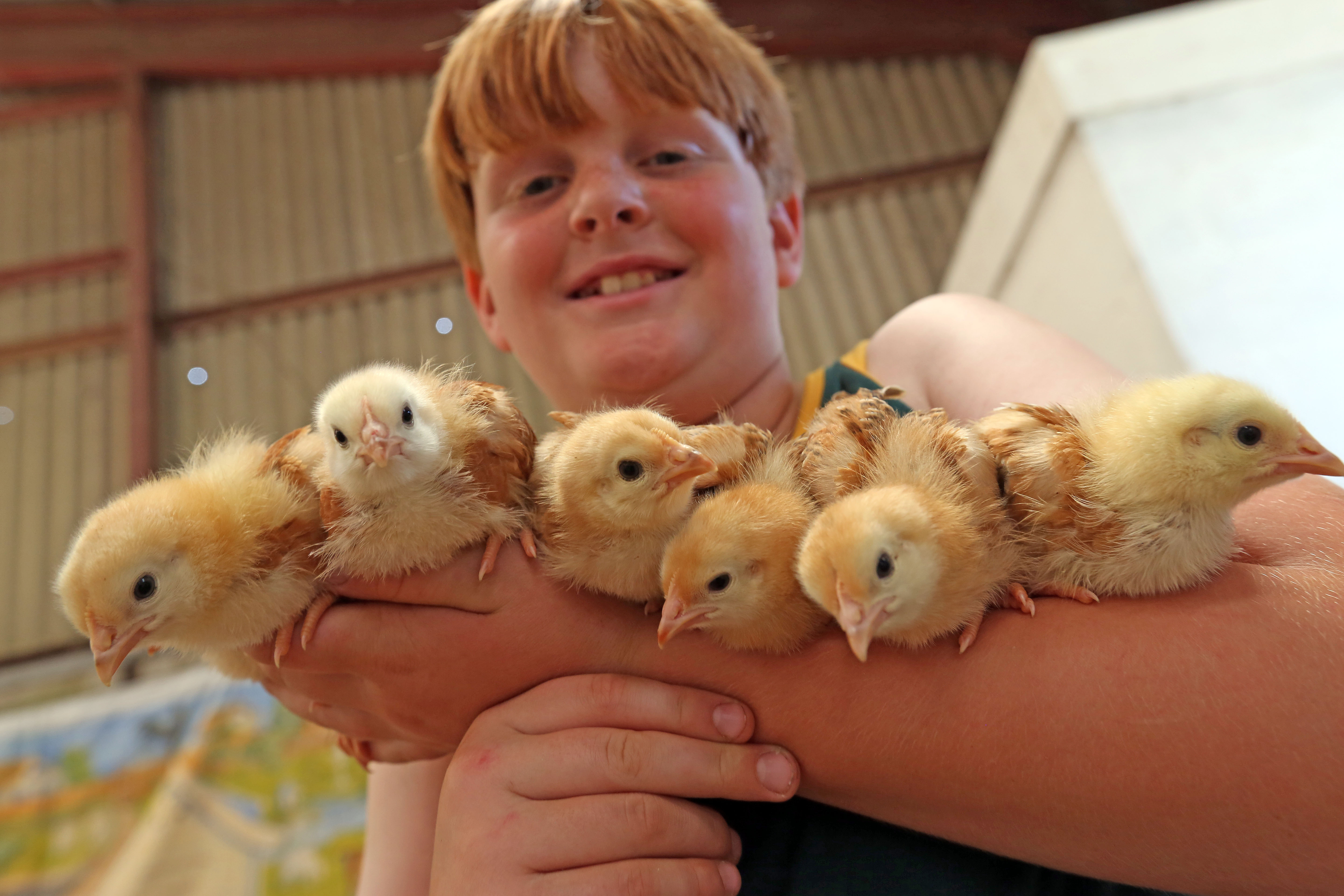 Arthur Pannell, 11, from Arun Valley Poultry Fanciers, Worthing