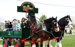Traditional London Harness Horse Parade 2