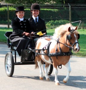 Traditional London Harness Horse Parade 3